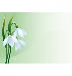 snowdrops vector image vector image