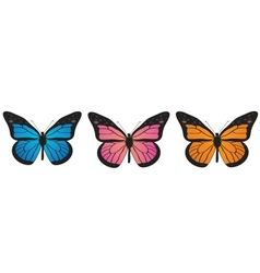 Monarch butterfly bllue orange and pink vector