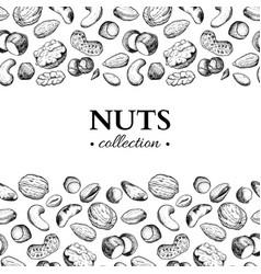 nuts vintage frame hand drawn vector image vector image