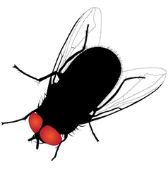 House fly silhouette on white background vector