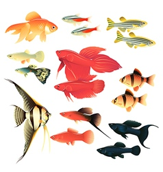 Aquarium fishes vector