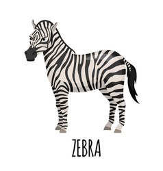 cute zebra in flat style vector image vector image