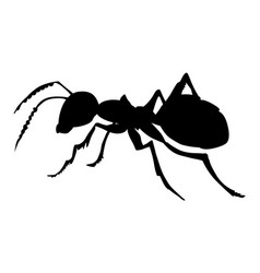 ordinary ant vector image vector image