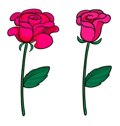 Two fresh roses vector