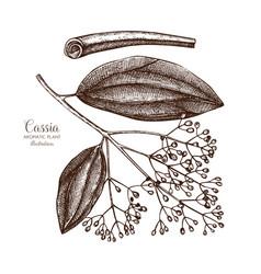 Cassia tree sketch vector