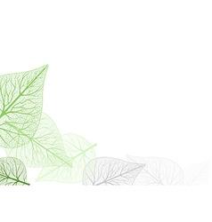 Leaf Venation vector image vector image