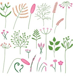 set of poaceae and leaves vector image vector image
