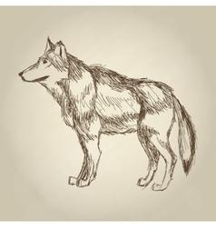 Wolf design Animal conceptWildlife animal vector image vector image
