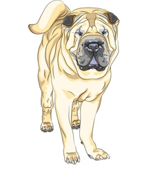 Sketch yellow gun dog breed chinese shar pei vector