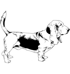 Dog drawn with ink on white background vector