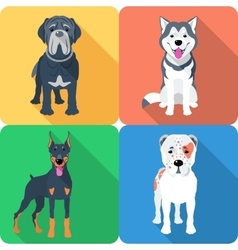 Dog neapolitan mastiff icon flat design vector