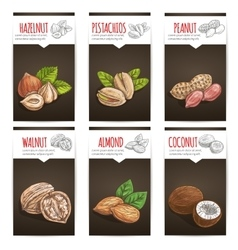 Nuts grain and kernels poster with titles vector