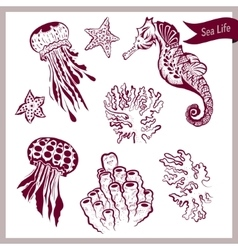 Beautiful marine life creatures collection vector