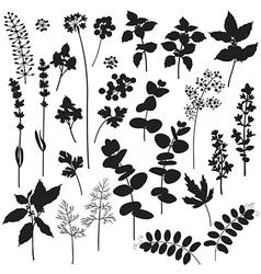 Plants silhouette vector