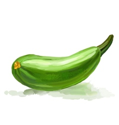 Zucchini hand drawn painted vector