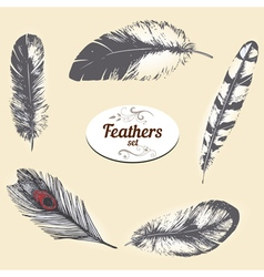 Feathers vector
