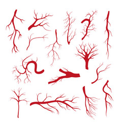 Set of blood vessels - modern isolated clip vector