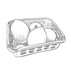 sketch of plastic container with lemons vector image