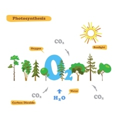 Image of photosynthesis vector