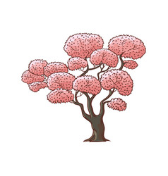 Blossoming pink cherry sakura tree vector