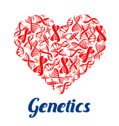 red heart with dna symbols vector image vector image