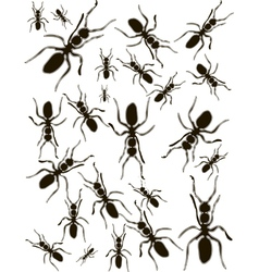 Set ants silhouette vector
