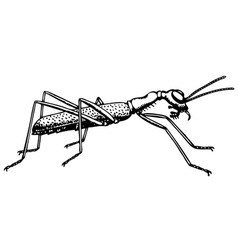 ant collyris vector image