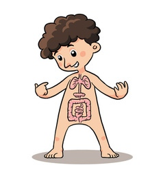 Child Body Organ vector image vector image