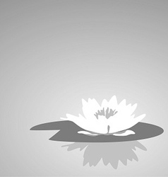 Flower lily against a dark background vector