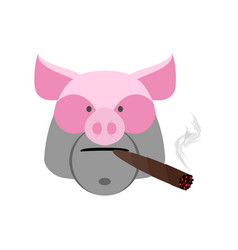 Angry boar with cigar aggressive pig isolated vector