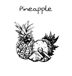 Hand drawn vintage isolated pineapple vector