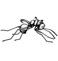 ant polyrrhachis vector image