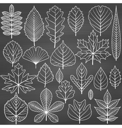 Set of tree leaves on chalkboard background vector