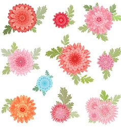 collection of chrysanthemums for your design vector image