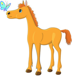 foal butterfly vector image