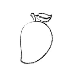 mango fresh fruit icon vector image
