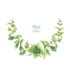 Watercolor wreath of mint branches isolated vector