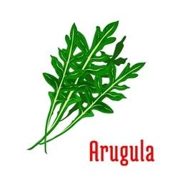 Arugula leafy vegetable icon vector