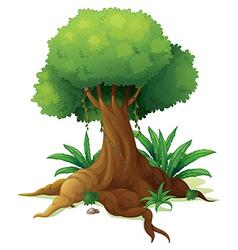 A big tree vector