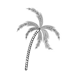 blurred thick silhouette of palm tree vector image