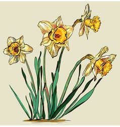 Yellow daffodil sketch vector