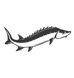 fresh seafood sturgeon icon on white background vector image