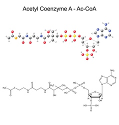 Model of acetyl coenzyme-a vector