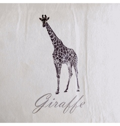 Vintage of a giraffe on the old wrinkled paper vector