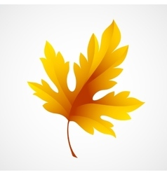 Fall leaf isolated in white vector image