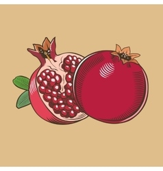 Pomegranates in vintage style Colored vector image vector image