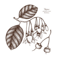 styrax tree plant vector image