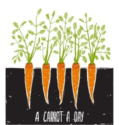 Growing Carrots Scratchy Drawing and Lettering vector image