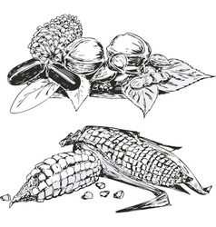 Sketches of vegetables in still life style vector