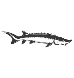 Sturgeon fish icon isolated on white background vector